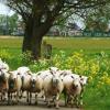 Subsidie vrijetijdssector / toerisme provincie Drenthe & gemeente Hardenberg